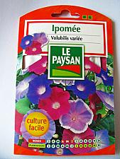 French Flower Seeds - Ipomee