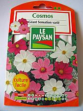 French flower Seeds - Cosmos